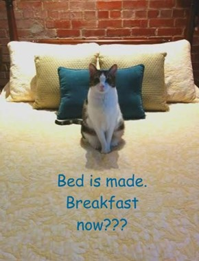 Bed is made. Breakfast now???