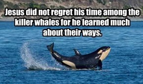 Jesus did not regret his time among the killer whales for he learned much about their ways.