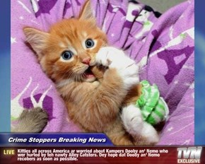 Crime Stoppers Breaking News - Kitties all across America ar worried about Kampers Dooby an' Nemo who wer hurted by teh nawty Alley Catsters. Dey hope dat Dooby an' Nemo recobers as soon as possible.