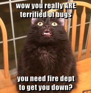 wow you really ARE                               terrified of bugs  you need fire dept                                    to get you down?