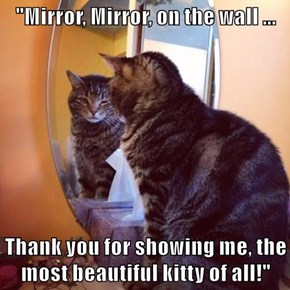 """""""Mirror, Mirror, on the wall ...  Thank you for showing me, the most beautiful kitty of all!"""""""