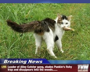 Breaking News - Leader of Alley Catster gang, eludes Punkin's fishy trap and disappears into the woods......