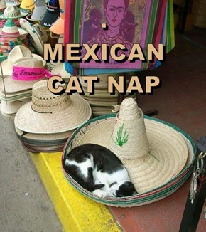 .                                     MEXICAN                 CAT NAP