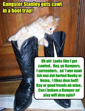 KAMP 2015: Dis gangster kittie wer cawt in a boot trap! But hims appeers to be innosent!
