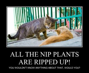 ALL THE NIP PLANTS ARE RIPPED UP!
