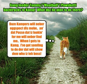 "KAMP 2015: In an unbeleebedly devious move, teh Alley Catster gang leeder Tommy (""Meatball"") Pawsketti doubles back on a rarely used path that leads to Kamp!"