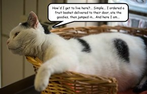 Clever Cat