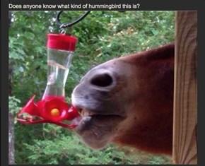 A Horsingbird?