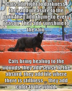 Cats add light to darkness, they add pleasure to the pain.They add rhyme to every reason. They add sunshine to the rain.  Cats bring healing to the wounds, they add sense to the absurd, they add life where there is stillness ... they add color to the worl