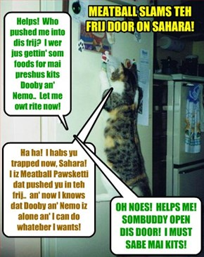 KAMP 2015: Soon after dat meanie Alley Catster gang leeder Tommy (Meatball) Pawsketti sekretly entered into teh Kamp, he saw teh opportunity to push Nemo and Dooby's mom Sahara into teh frig an' trap her der!
