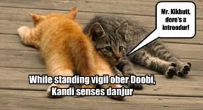 Kandi protects Doobi