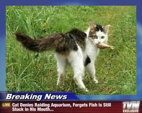 Breaking News - Cat Denies Raiding Aquarium, Forgets Fish is Still Stuck in His Mouth...