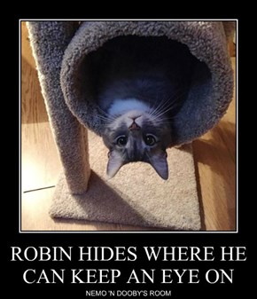 ROBIN HIDES WHERE HE CAN KEEP AN EYE ON