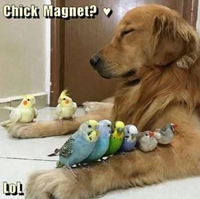 Chick  Magnet?  ♥  LoL
