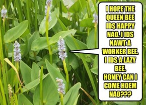 I HOPE THE QUEEN BEE IDS HAPPY NAO. I IDS NAWT A WORKER BEE. I IDS A LAZY BEE. HONEY CAN I COME HOEM NAO???