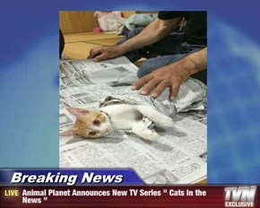 """Breaking News - Animal Planet Announces New TV Series """" Cats in the News """""""