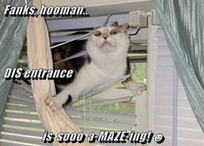 Fanks, hooman.. DIS entrance is  sooo  a-MAZE-ing! ☻