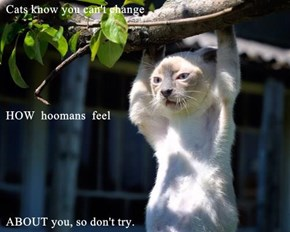 Cats know you can't change  HOW  hoomans  feel  ABOUT you, so don't try.