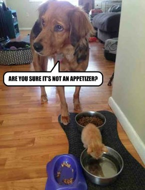ARE YOU SURE IT'S NOT AN APPETIZER?
