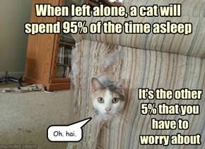 Brave splorer kitteh iz awake
