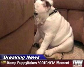 Breaking News - Kamp PuppyKakes *GOTCHYA* Moment