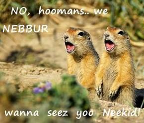 NO,  hoomans.. we  NEBBUR  wanna  seez  yoo  Neekid!