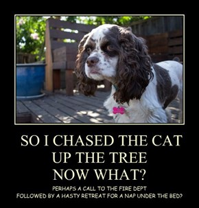 SO I CHASED THE CAT UP THE TREE NOW WHAT?