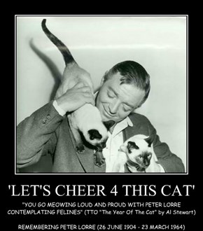 'LET'S CHEER 4 THIS CAT'