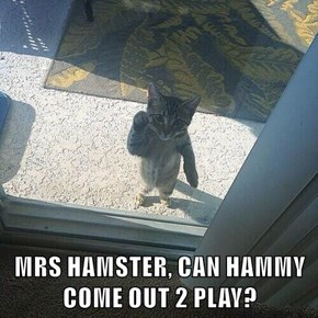 MRS HAMSTER, CAN HAMMY COME OUT 2 PLAY?
