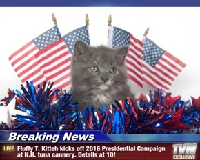 Breaking News - Fluffy T. Kitteh kicks off 2016 Presidential Campaign at N.H. tuna cannery. Details at 10!