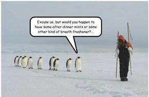 Bad Breath in Penguins