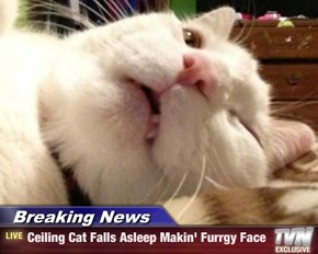 Breaking News - Ceiling Cat Falls Asleep Makin' Furrgy Face