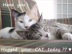 Have  you   Hugged  your  CAT  today ?? ♥
