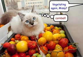 Vegetating again, Missy?