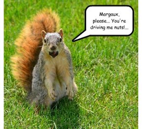 Squirrels on the Verge of a Nervous Breakdown