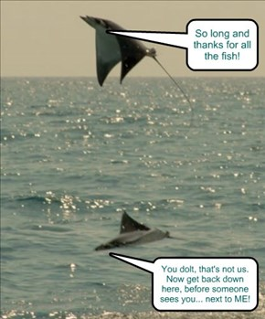 Don't you know it's a baaad idea to piss off the dolphins?