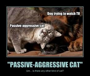 """PASSIVE-AGGRESSIVE CAT"""