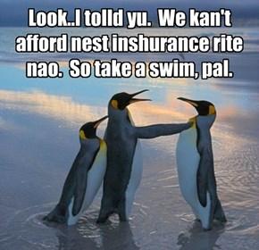 Look..I tolld yu.  We kan't afford nest inshurance rite nao.  So take a swim, pal.