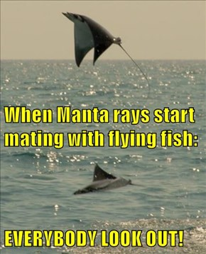 When Manta rays start mating with flying fish: EVERYBODY LOOK OUT!