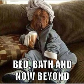 BED, BATH AND NOW BEYOND