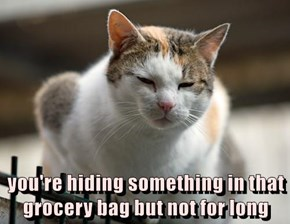 you're hiding something in that grocery bag but not for long