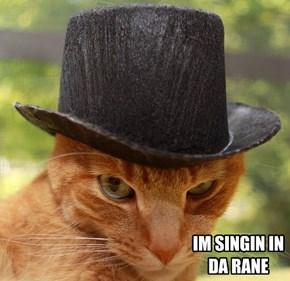 A Clockwork Orange Cat