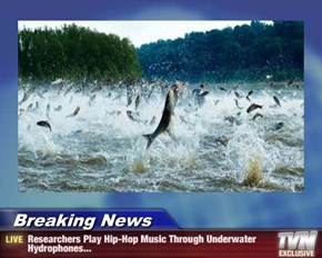 Breaking News - Researchers Play Hip-Hop Music Through Underwater Hydrophones...