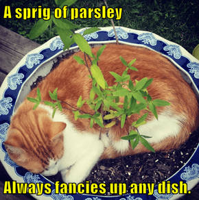 A sprig of parsley   Always fancies up any dish.