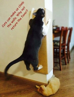 Cats can make us climb the walls. Why not return the favor?