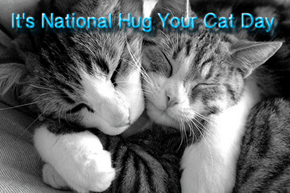 Be Apart Of Our Community Hugging Their Cats On National Hug Your Cat Day!