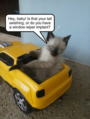Worst Cat-in-a-Pickup Line Ever