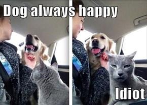 Dog always happy  Idiot