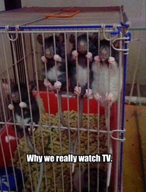 Why we really watch TV.
