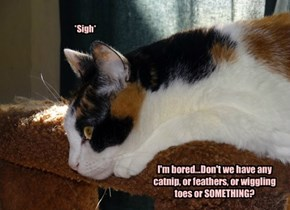 I'm bored...Don't we have any catnip, or feathers, or wiggling toes or SOMETHING?